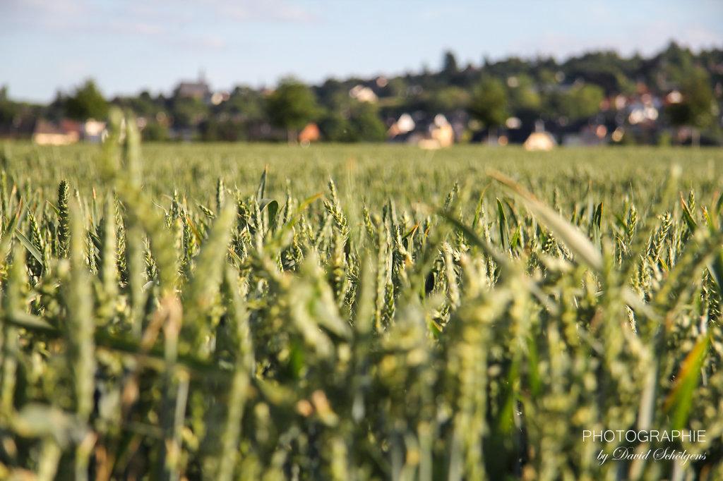 Herbst in den Feldern / autumn in the fields