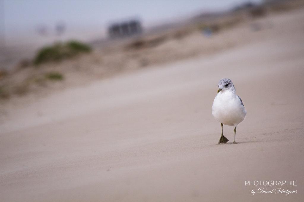 Möwenspaziergang / seagull walk