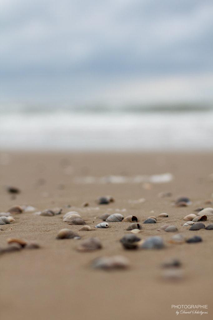 Muscheln am Strand / shells on the beach